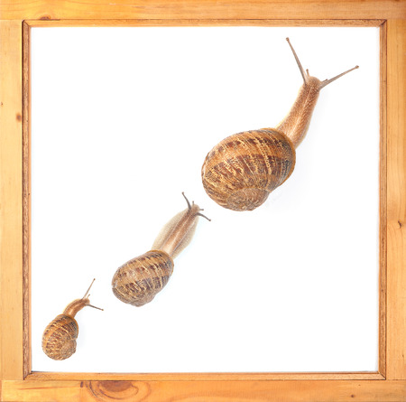 Three snails from small to big illustrate sluggish growth. Imagens
