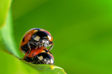 Spring green plants and lucky ladybug macro photo