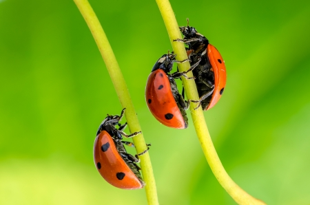 Spring green plants and lucky ladybug macro Stock Photo - 18001950