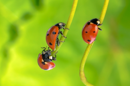 Spring green plants and lucky ladybug macro Stock Photo - 18001958