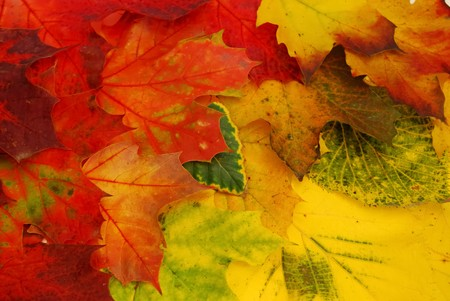 Background with colored fall leaves  photo
