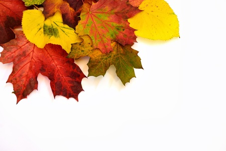 Colorful fall leaves isolated on white background