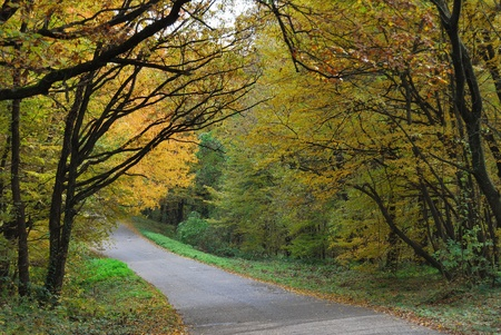 Small road through beautiful autumn forest in national park  photo