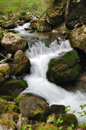 Wild stream between stones in green forest landscape photo