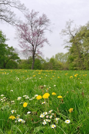Early spring flowers on green field in park photo