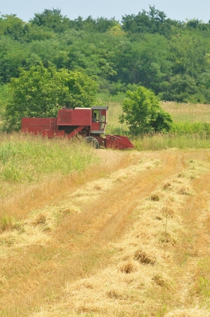 Red combine harvesting in the field of wheat Stock Photo - 14575774