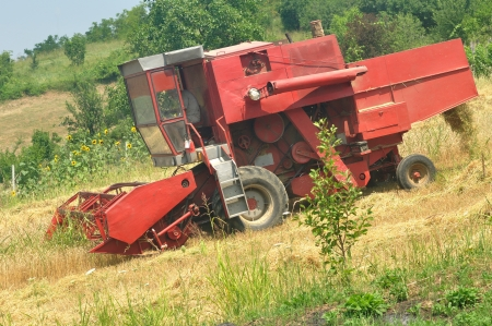 Red combine harvesting in the field of wheat Stock Photo - 14575781