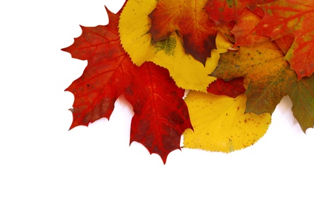 arrangment: Colorful autumn leaves isolated on white background. Stock Photo