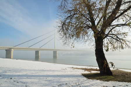 Winter morning by Danube river with tree and bridge in fog photo