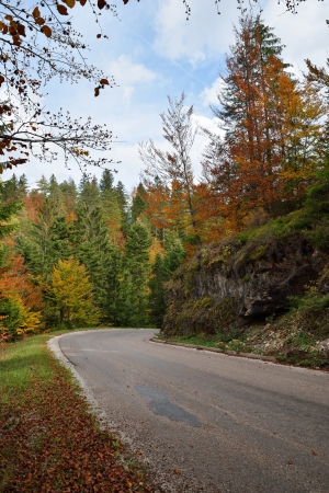 Autumn Forest with Colorful Leaves on Trees and Curved Road photo
