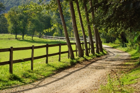 Fence and Trees by Curved Road in Countryside with Green Field  photo