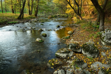 Autumn Landscape  with Mountain River in Colorful Forest photo