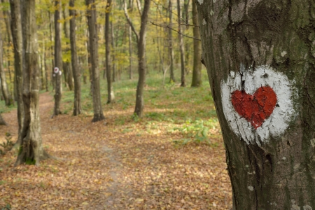 loveheart: Love heart painted on the bark of a tree in forest