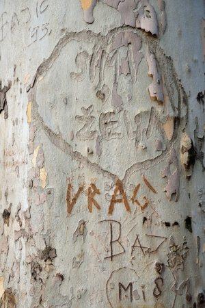 Heart shape with writing text on bark of tree, texture background photo