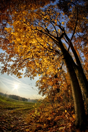 acer: Autumn forest Stock Photo