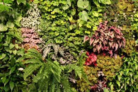 plants species: Live Wall