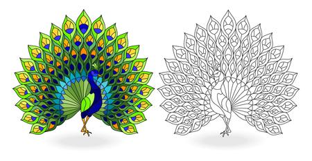 Satz Buntglaselemente mit Pfauenvögeln, Kontur- und Farbbildern, isoliert auf weißem Hintergrund