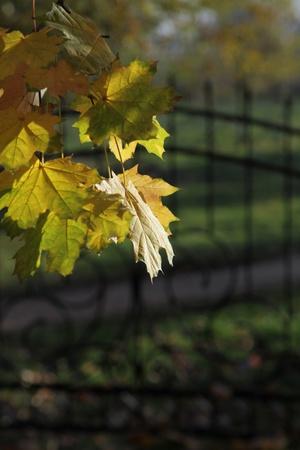Autumn-the golden age photo