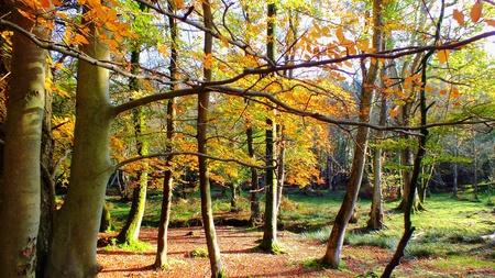 hampshire: Bolderwood en el bosque de Nueva Foto de archivo