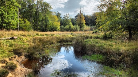 Blackwater in the New forest Stock Photo