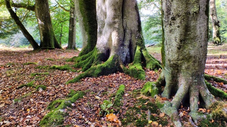 quite time: Bolderwood in the New forest