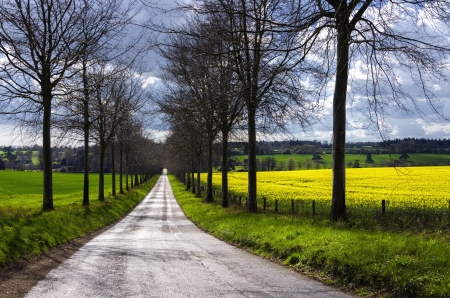 A tree lined avenue through fields of oilseed rape Stock Photo - 16505691