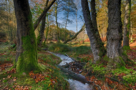 A stream flowing though ancient Autumn woodland at Bolderwood in the New Forest National Park in Hampshire  Stock Photo