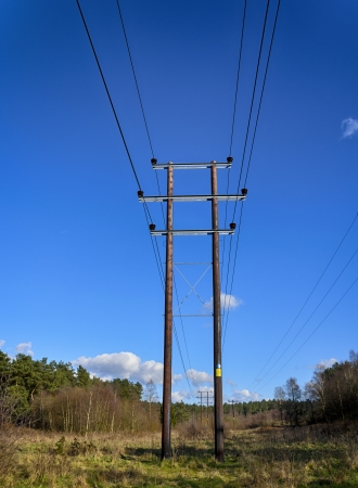 Telegraph poles through a forest clearing. Stock Photo