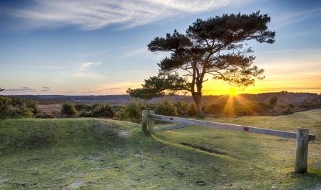 햄프셔 뉴 포레스트 국가 공원에서 브랫보기에 스코트어 소나무 사이로 비치는 햇빛의 항성 스톡 콘텐츠
