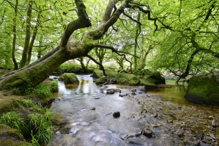 bodmin: Fast river flowing over mossy rocks and boulders through ancient woodland in Cornwall south of Bodmin Moor