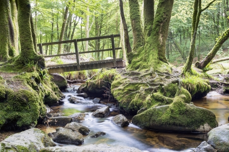 A wooden bridge crosses a stream running through ancient woodland on the southern edge of Bodmin Moor in Cornwall photo