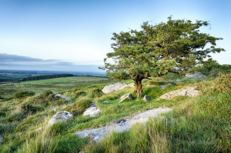 bodmin: A gnarled tree on Bodmin Moor Stock Photo