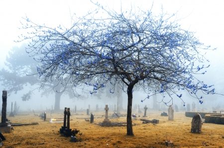 A foggy cemetery in infrared photo