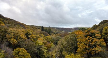 autumn colour: Autumn colour at Burrator Wood on Dartmoor in Devon Stock Photo