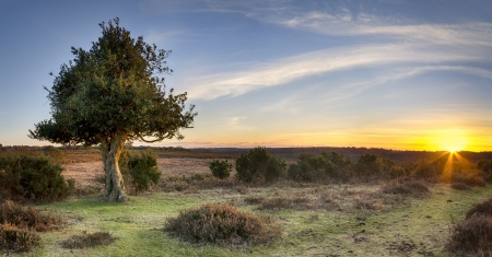 A Starburst of sunlight at Bratley View in the New Forest National Park in Hampshire Stock Photo