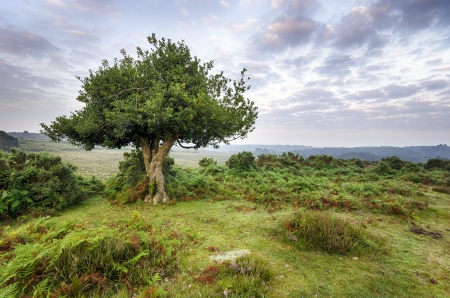 Dawn at Bratley View in the New Forest National Park in Hampshire