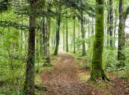 Path leading through dense green woodland at Hart Woods in Cornwall. Stock Photo