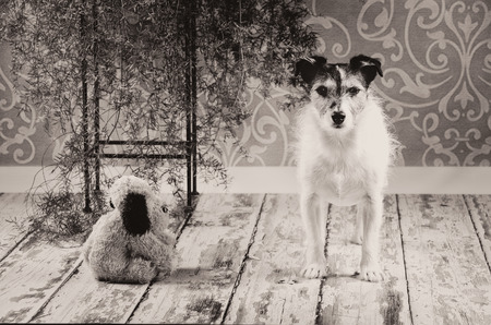 Vintage Dog With Toy photo