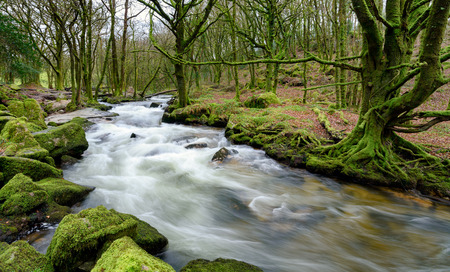 The River Fowey as it casades over moss covered rocks and boulders at Golitha Falls on the southern edge of Bodmin Moor in Cornwall photo