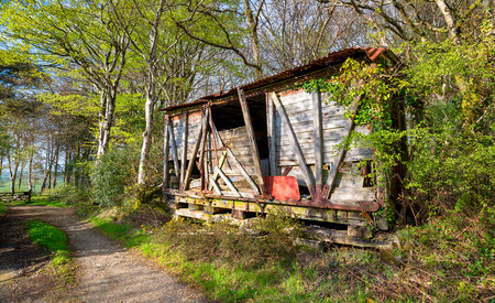 rickety: A rickety derelict wooden shed in the woods