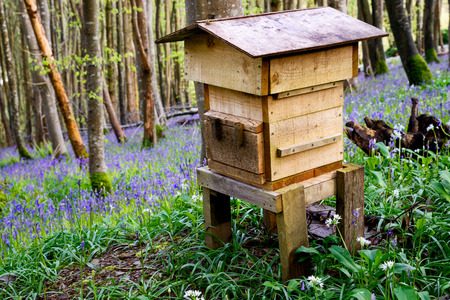 A wooden beehive in beautiful woodland and surrounded by bluebells and wild garlic. photo