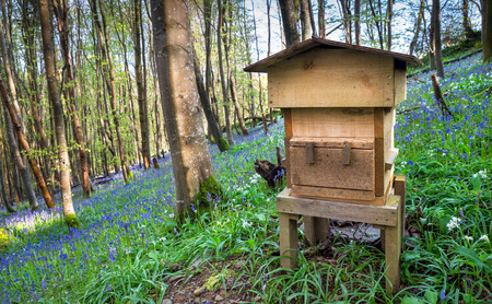 beautiful woodland: A wooden beehive in beautiful woodland and surrounded by bluebells and wild garlic.