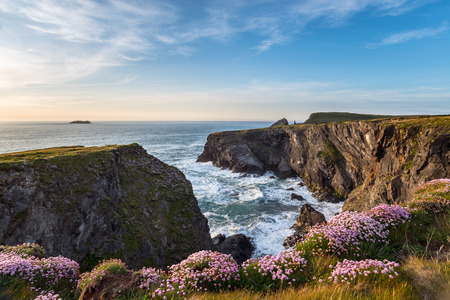 steep cliffs: Clumps of Sea Thrift (Armeria maritima) growing on steep cliffs at Pencarrow Cove near Padstow in Cornwall Stock Photo