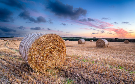 Sunset over bales of barley hay in a field near Padstow in Cornwall photo