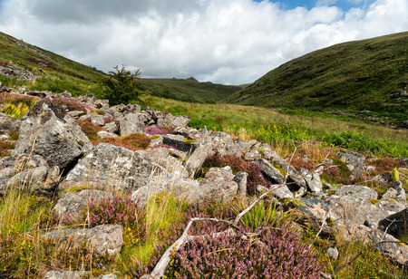 cleave: Heather growing amongst rocks at Tavy Cleave on dartmoor national Park in Devon