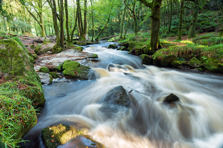 bodmin: Golitha Falls a magical forest cascade on the southern edge of Bodmin Moor in Cornwall