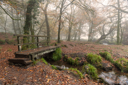 A wooden bridge across a stream in foggy woodland at Golitha Falls in Cornwall photo