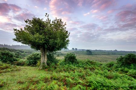 새로운 숲 국립 공원의 새벽
