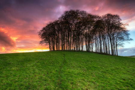 copse: A beautiful fiery sunset over a beech tree copse on a hill