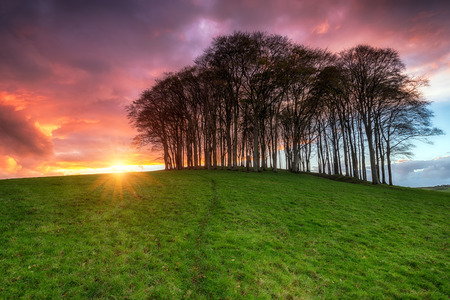 A beautiful fiery sunset over a beech tree copse on a hill 版權商用圖片 - 34805468